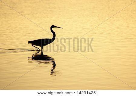 bird wading in water reflection serene calm sunshine dusk