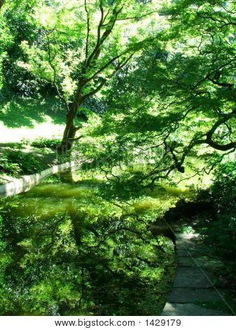Reflexions, Fine Tracery Of Green Foliage Tree And Water