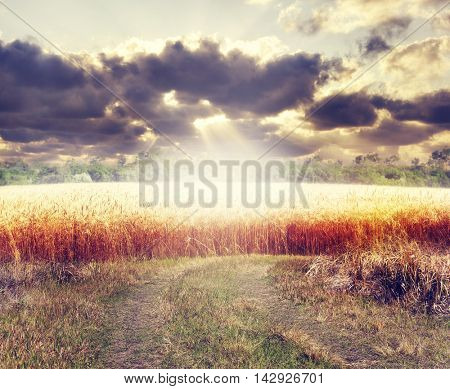 Rural landscape with wheat field at sunset