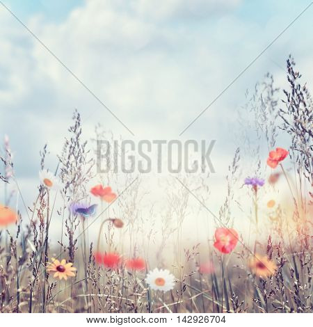 Field with wild flowers at sunset