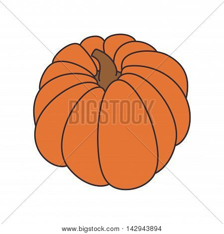 pumpkin vegetable food orange fresh nutrition healthy natural vector illustration isolated