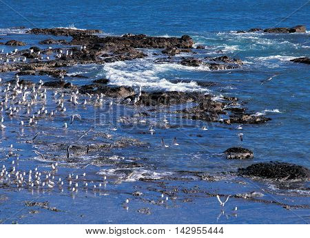 Sea landscape with gulls