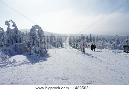 A cross country ski track through snowy spruces on the Fichtelberg in the Ore Mountains, withal a path for walkers