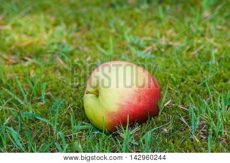One rich apple on fresh grass background selective focus