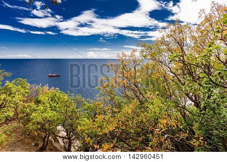 ship sailing in the sea and trees in the foreground