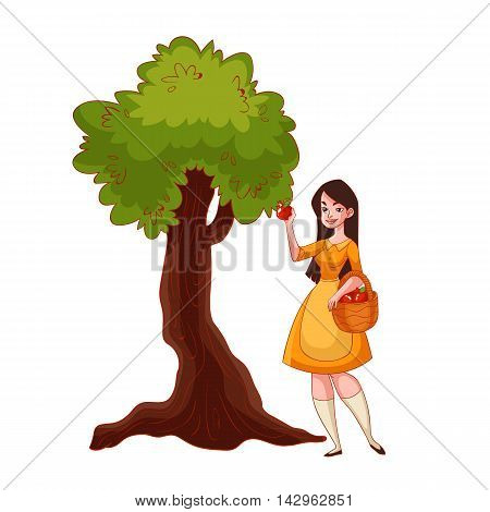 Young beautiful woman picking apples in the garden, cartoon style vector illustration isolated on white background. Apple harvesting in the fall time, countryside gardening, harvest time concept