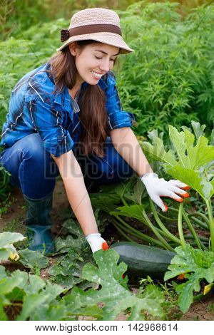 Woman hold zucchini in hand on field. Gardener with zucchini in garden. Harvest. Young farmer harvesting zucchini. Happy young girl with zucchini. Girl shows a crop of zucchini in the garden