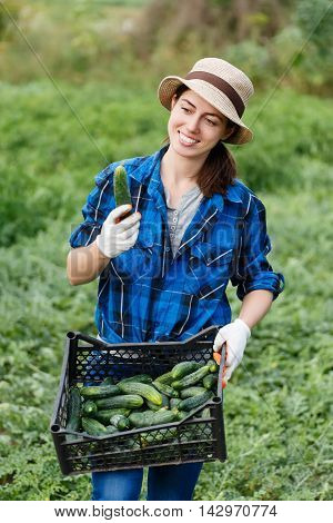 Gardener with freshly harvested cucumbers in garden. Woman with a crate with healthy fresh organic cucumbers. Harvest. Happy woman with vegetables harvest