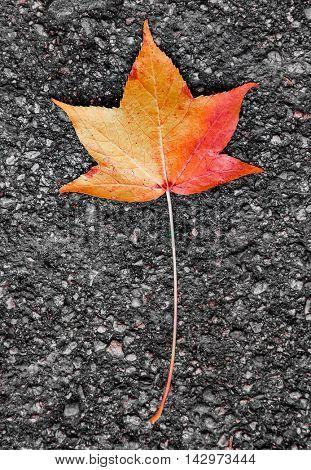 Lone leaf on the ground