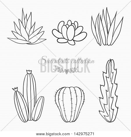 black and white sketches of cactuses, succulents and other desert plants