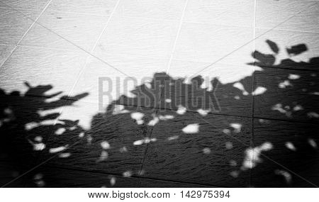 Black And White Photo, Tree Shadow On Floor