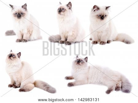 Beautiful cat collection isolated on white background.