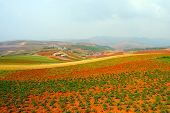 picture of loamy  - Field landscape in Yunnan Province southwest of China - JPG