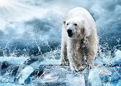 image of south-pole  - White Polar Bear Hunter on the Ice in water drops - JPG
