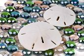 stock photo of sanddollar  - two sanddollars nestled on a bed of colorful glass stones - JPG