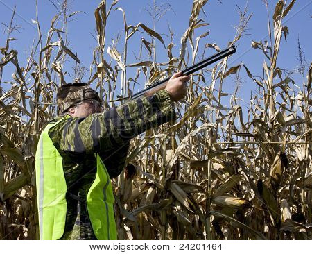 Fall Bird Hunter In A Corn Field