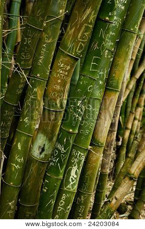 Love In Bamboo