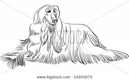 Vector Sketch Dog Afghan Hound Breed Lying