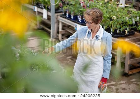 High angle view of senior female worker working at greenhouse