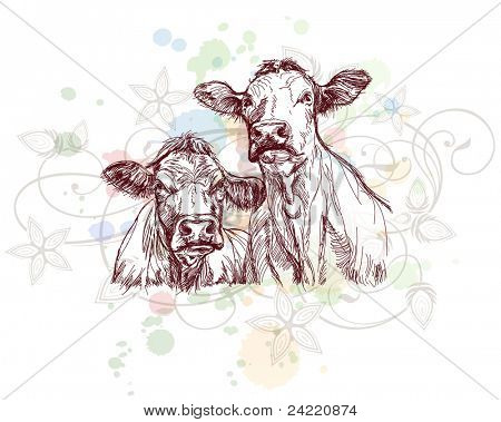 two cows hand draw sketch  & floral calligraphy ornament - a stylized orchid, color paint background. Bitmap copy my vector ID 70776100