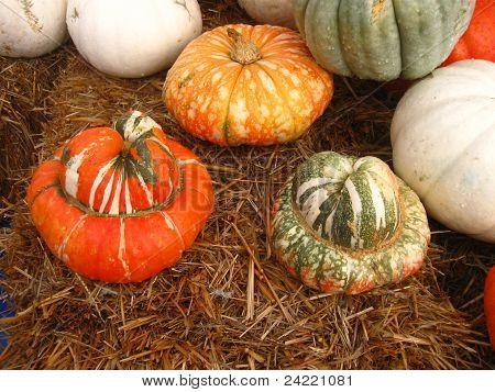group of pumpkins