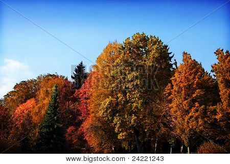 Beautiful group of trees in bright autumnal colors with blue sky background