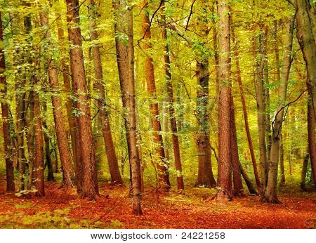 Looking in a beautiful autumnal forest with bright coloured leaves on the ground