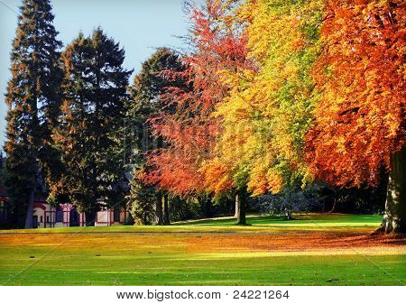 Beautiful place in the park with autumnal colored trees and blue sky