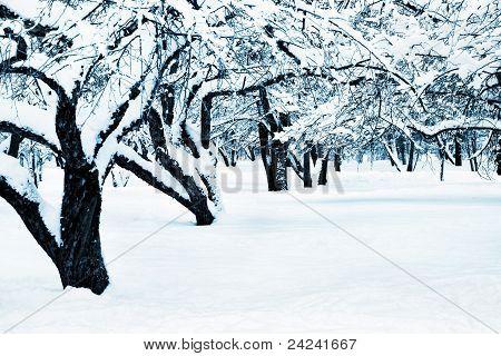 Winter Landscape Toned Blue