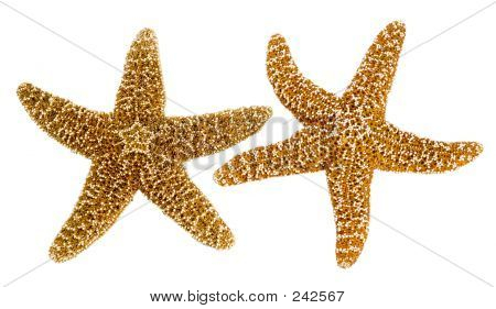 Isolierte Star Fish