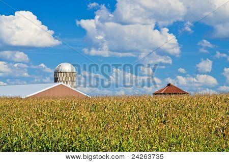 Corn Field, And Farm
