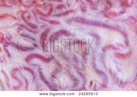 The inner surface of shell  bull testicles
