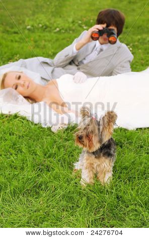 Beautiful young groom and bride wearing white dress lie on green grass; man looking through binoculars at small dog; focus on dog