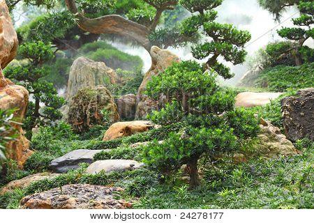 chinese garden plants