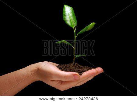 Hands holding plant in soil on black