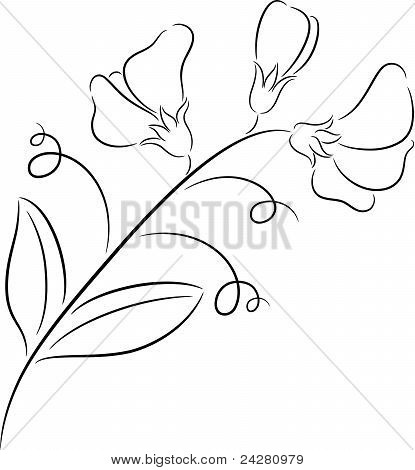 Echinacea Herb Drawing in addition Onion Plant Diagram furthermore Root Diagram Cross Section further Celery Stalk Cross Section Label also Castle Outline Template. on plant top view