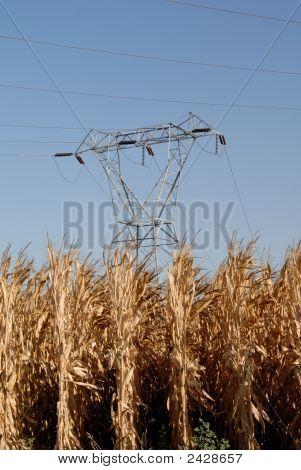 Elektrische Türme und Mais