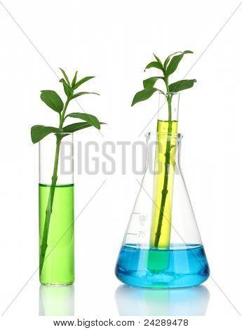 la planta en un tubo de ensayo, aislado en blanco