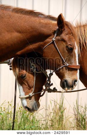 Sleepy Ranch Horses