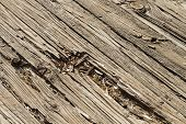 Old Wooden Residential Patio Deck Boards That Have Been Weather And Sun Damaged Over The Years. They poster
