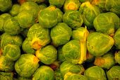 picture of yucky  - a pile of brussel sprouts - JPG
