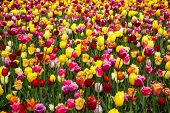 Beautiful Flower Garden With Colorful Blooming Flowers poster