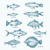 Hand Drawn Ocean Or Sea And River Ten Fishes Set. A Collection Of Salmon And Tuna Or Pike And Anchov poster