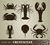 stock photo of crustaceans  - crustacean set - JPG