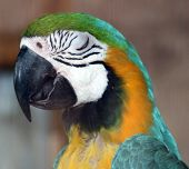 stock photo of polly  - parrot sleeping night watch memories just looking no way polly - JPG