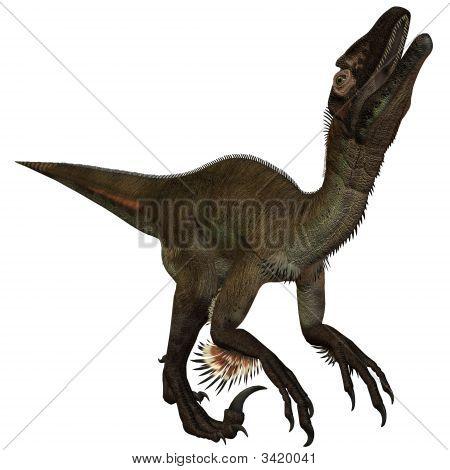 Utahraptor Ostrommayorum-3D Dinosaur