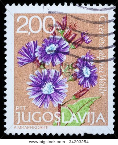 YUGOSLAVIA - CIRCA 1980: A stamp printed in Yugoslavia shows Cicerbita alpina Wallr, series, circa 1980