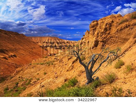 Canyon Plateau Ustyurt In Kazakhstan