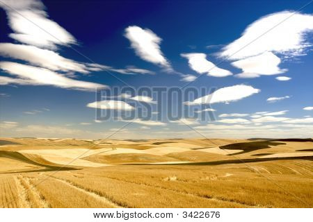 Agricultural Farmland In The Palouse Region Usa
