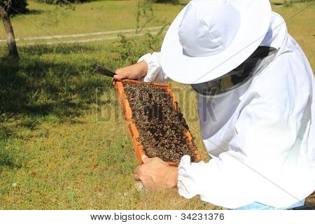 Imker mit Biene-Kolonie